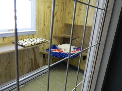 Your cat will be safe and sound while boarding at Morgan's Paws Pet Care Center in York, PA
